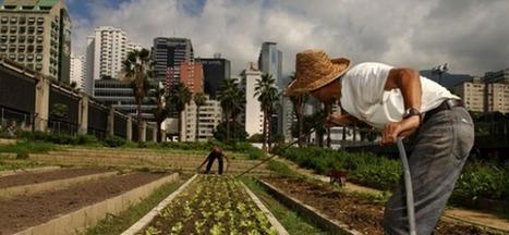 L'avenir de nos villes passe par le développement de l'agriculture urbaine | Agriculture urbaine et rooftop | Scoop.it