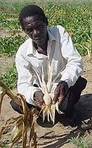 Food Shortage in Southern Africa | Hardship | Scoop.it
