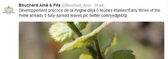 Mauvaise cuvée pour internet | etourisme | Scoop.it