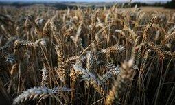 Bayer bids $62bn for GM seed giant Monsanto   OrganicNews   Scoop.it
