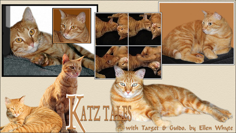 Katz And Other Tales: Guido: I Am A Famous Hunter! | Pet Health and Happiness | Scoop.it