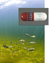 Drugged Fish Lose Their Inhibitions, Get the Munchies | Amocean OceanScoops | Scoop.it