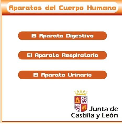 Zona de Alumnos de la Junta de Castilla y León (Aparatos digestivo, respiratorio y urinario) | APRENDER Y DIVERTIRSE...¡¡TODO EN 1!! | Scoop.it