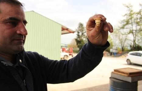 Les abeilles françaises victimes des pesticides et… des impôts | Filière apicole française | Scoop.it