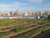 City Garden on the Rooftops of NYC - City Garden And Farming | Vertical Farm - Food Factory | Scoop.it