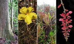 New plant species discovered in 2015 - in pictures | Erba Volant - Applied Plant Science | Scoop.it