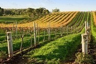 In New Zealand, A master in the world of wine | Vitabella Wine Daily Gossip | Scoop.it