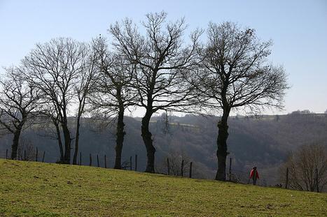 Paysages de l'Aveyron: Sainte Juliette - Cante merle | Aveyron | Scoop.it