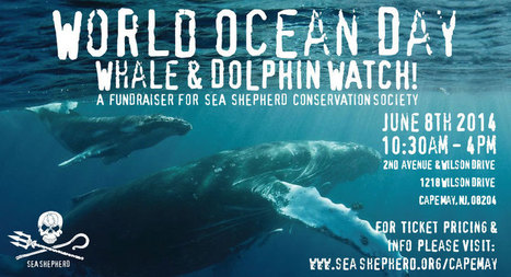 #WorldOceanDay #Whale & #Dolphin #Watch - Sea Shepherd Conservation Society | Rescue our Ocean's & it's species from Man's Pollution! | Scoop.it