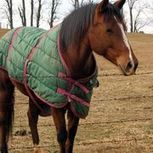 What Type of Rug Does a Horse Need? | Horse Rug Sale | Scoop.it