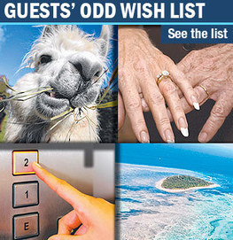 Alpacas top list of quirky hotel requests - Gold Coast Bulletin News | Visit Gold Coast | Scoop.it