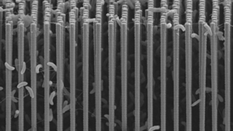 How #nanomaterials can help make fuel from sunlight #nanotechnology   Nanotechnology News   Scoop.it