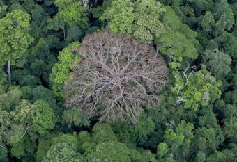 Médias Citoyens Diois: Forêt des Chambaran, lettre d' une habitante à son député... | Lecture citoyenne | Scoop.it