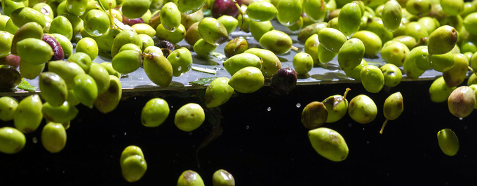 World Olive Oil Consumption Increased by 73 Percent Over a Generation