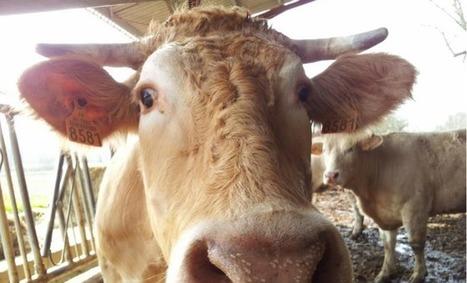 Agriculture: la météo aggrave des marchés dégradés | Agriculture Aquitaine | Scoop.it