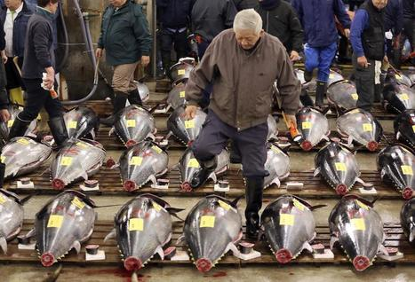 "Pacific Bluefin Tuna Population Has Dropped 97% (""give this fish a break before they are all gone"") 