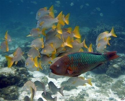Marine Life Reacting Faster to Climate Change   Sustain Our Earth   Scoop.it