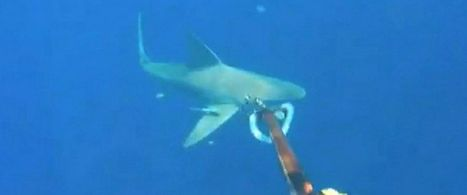 Scuba Diver in Real-Life 'Open Water' When Boat Strays, Sharks Circle | ScubaObsessed | Scoop.it