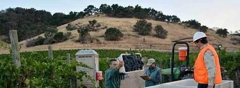 Kick Off for the California Wine Harvest | Vitabella Wine Daily Gossip | Scoop.it