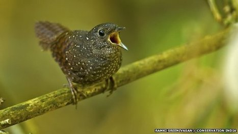 New bird family discovered in Asia | #WildlifeWatch | Scoop.it