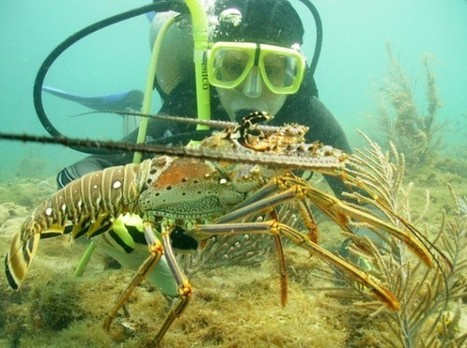 Time for Honduras to End #Scuba Diving for Lobster   Lanka property exchange   Scoop.it