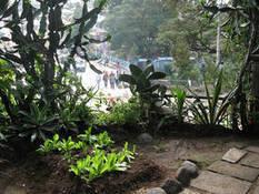 Quels sont les avantages de l'agriculture urbaine ? | Agriculture des villes | Scoop.it