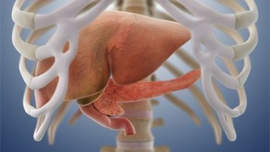 Stem-cell livers grown in laboratory   leapmind   Scoop.it