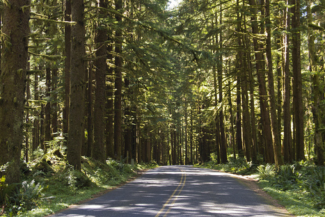 Drive in Hoh Rainforest | Flickr - Photo Sharing! | Forests Unlimited | Scoop.it