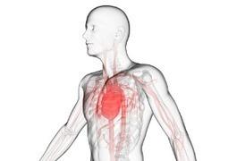 Et si le Viagra était la clé pour traiter les maladies cardiaques ?   Impuissance et troubles érectiles   Scoop.it
