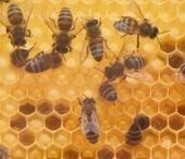 Varroa-Milbe mit neuen Mitteln bekämpfen - Proplanta - Das Informationszentrum für die Landwirtschaft   Bienen   Scoop.it