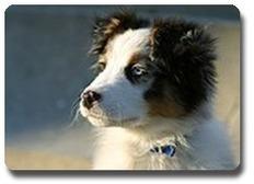 La propreté du chiot, comment lui apprendre ? Education canine | Educateur canin en Alsace - Etoile des bergers | Scoop.it