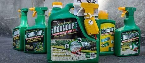 L'offensive de Ségolène Royal contre le Roundup de Monsanto | Toxique, soyons vigilant ! | Scoop.it
