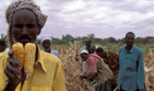 Famine we could avoid   Food and Nutrition   Scoop.it