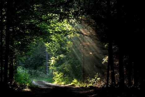 Belowground carbon trade among tall trees in a temperate forest | Agriculture et planète | Scoop.it