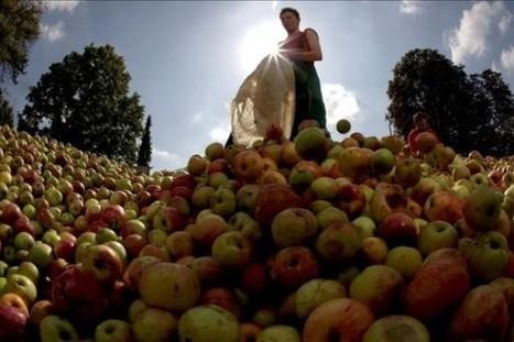 Comer una manzana al día te aleja de la farmacia   I didn't know it was impossible.. and I did it :-) - No sabia que era imposible.. y lo hice :-)   Scoop.it