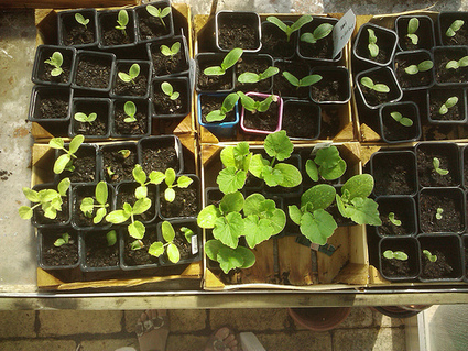 Audio : L'agroécologie, c'est pour bientôt ? | Economie Responsable et Consommation Collaborative | Scoop.it