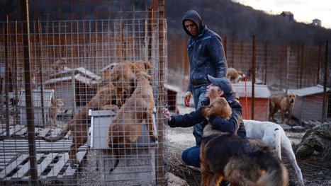 Racing to Save the Stray Dogs of Sochi   Sochi Olympic Fails   Scoop.it