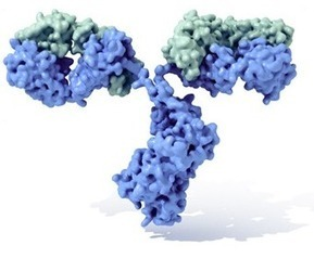 2014 Gordon Research Conference on Antibody Biology and Engineering | Immunology and Biotherapies | Scoop.it