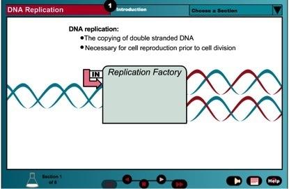 Essential Biochemistry - DNA Replication   SIMULATIONS   Scoop.it