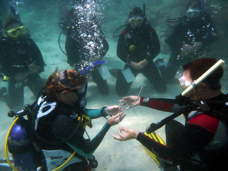 Scuba Diving in Honduras with UTILA DIVE CENTRE - Divers' Reviews   Dive Operators around the World   Scoop.it