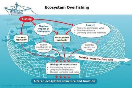 Ecosystem #overfishing ~ #Sciencelearn Hub | Rescue our Ocean's & it's species from Man's Pollution! | Scoop.it
