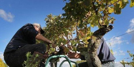 Bilan mitigé pour l'agriculture en 2014 | Agriculture en Gironde | Scoop.it