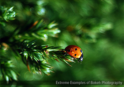 99 Extreme Examples of Bokeh Photography | Behavioral Tech | Scoop.it