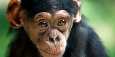 Are Animal Rights 'Human' Rights? | Dinkes & Schwitzer PC | Scoop.it