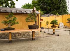 Japanese Garden and Bill Hosokawa Bonsai Pavilion | Denver Botanic Gardens | Japanese Gardens | Scoop.it