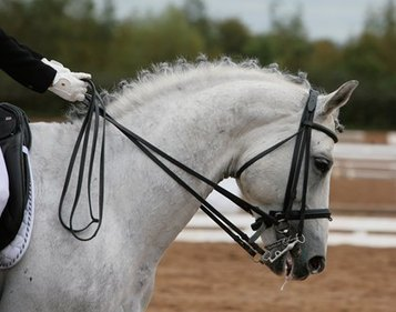 Researchers Study Head, Neck Positions' Effects on Muscles - TheHorse.com | Horse Kinetics | Scoop.it