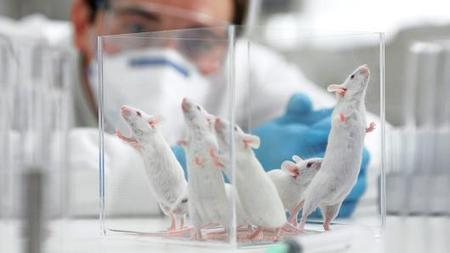 Scientists experiment to make old brains new again | Biotech, E-Health & TransmediaReady | Scoop.it