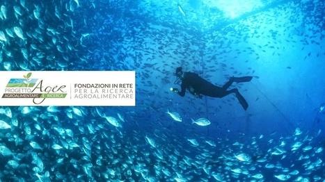 Teramo, Izs partner di un progetto sulla produttività degli allevamenti di pesce | CityRumors.it | Fondazione Mach | Scoop.it