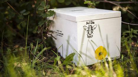 Building Better Homes for Bumblebee Queens - KQED | Bug Hugger | Scoop.it