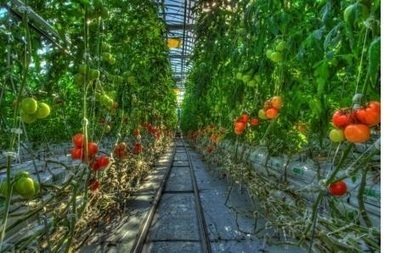 The Rise of Indoor Cropping - Triple Pundit   growing chillies   Scoop.it